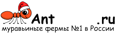 Муравьиные фермы AntFarms.ru - Самара